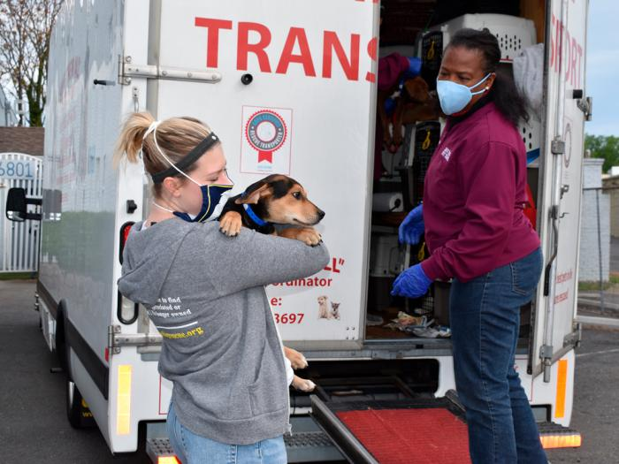 This Nov. 13, 2020 photo provided by Lost Dog and Cat Rescue Foundation shows a handler holding a rescue dog from Georgia in Falls Church, Va.