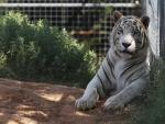 Lawyer: 'Tiger King's' Jeff Lowe Willing to Give Up Big Cats